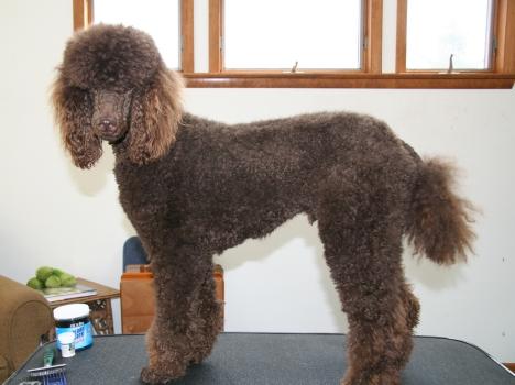Joey BEFORE I gave him a haircut...  little shaggy!!!!