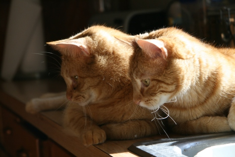 Another cute picture of Marmalade and Zack