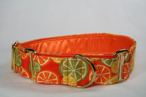 Joey's new citrus collar
