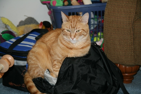 Marmalade in Nancy's Bag