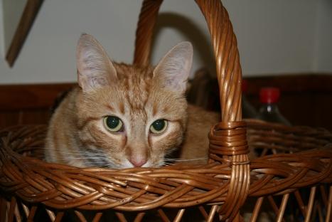 Marmalade in Marcia's Basket