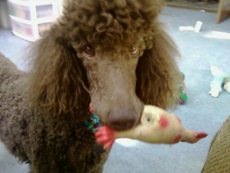 Joey and his rubber chicken